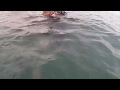 chasse sous marine au pays basque(grosse seiche)!