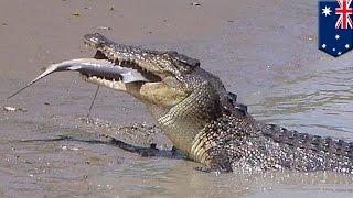 オーストラリア北部の国立公園で、ワニとサメの大迫力バトルが目撃され...