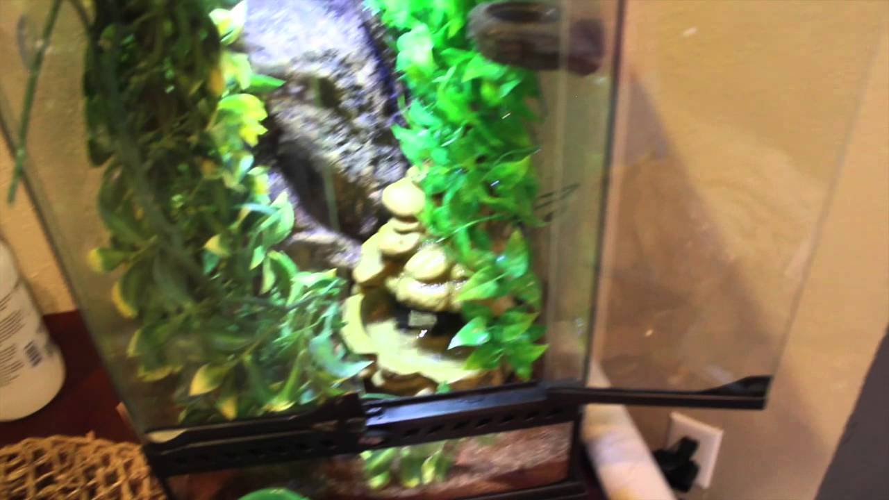 Online Get Cheap Turtle Tanks for Sale -Aliexpress.com