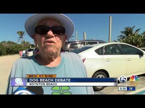 Boynton Beach Wants Feedback On Dog Beach