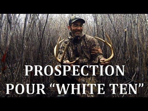 CHASSE AUX CHEVREUILS - Prospection  pour ''White Ten''