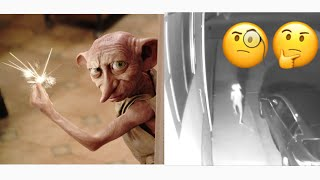 Dobby Elf From Harry Potter Caught On Camera In Real Life 😩