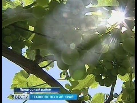 Онлайн ТВ с архивом: Телеканал Россия 24 смотреть...