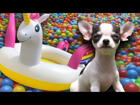 UNICORN DOG BALL PIT with Chih...