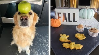 PUMPKIN SPICED COOKIES! (Fall Recipes for Dogs)