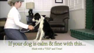 "Injury - Cone Desensitizing ""dog Training"""