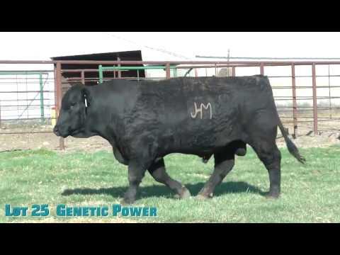 Lot 25  Genetic Power