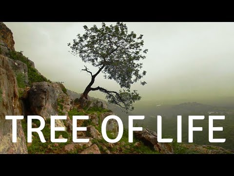 TREE OF LIFE( music) A guided meditation for sleep and healing