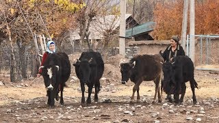 Tajikistan: Poverty reduction through climate resilience