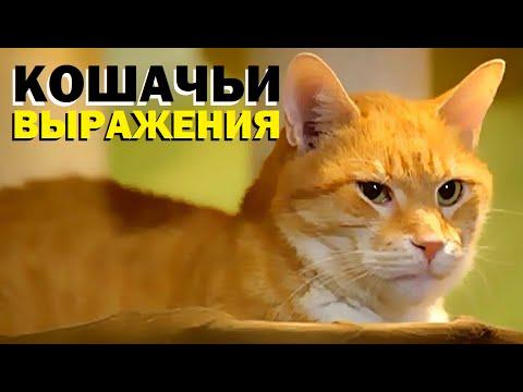 Галилео. Кошачьи выражения