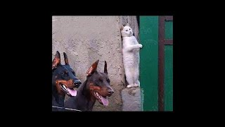 💗Aww - Funny and Cute Animals Compilation 2019💗 #19