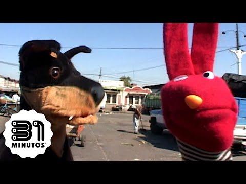 31 minutos - Nota verde - Perros callejeros