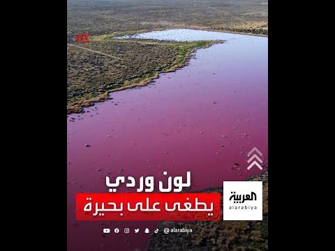 لون وردي يطغى على بحيرة في الأرجنتين