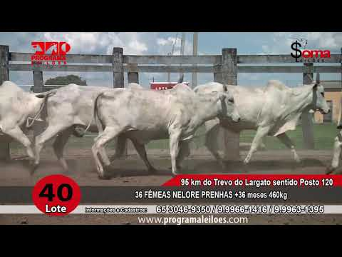 LOTE R40