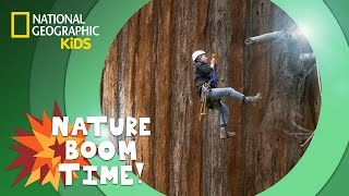 Sequoia National Park | NATURE BOOM TIME