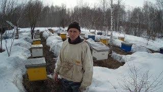 Выставка пчёл 2018