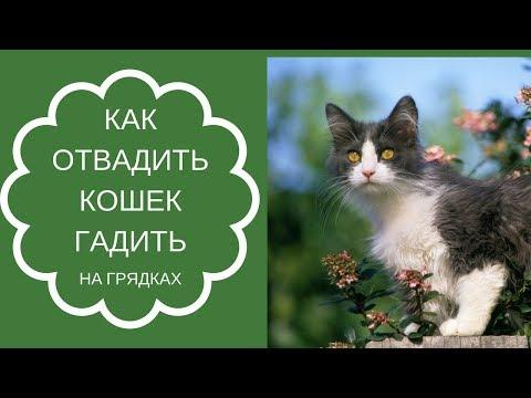 Вопрос: Как научить своего кота гадить на соседский коврик?