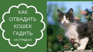 Как отвадить кошек гадить на грядках, клумбах и дорожках. ч.1