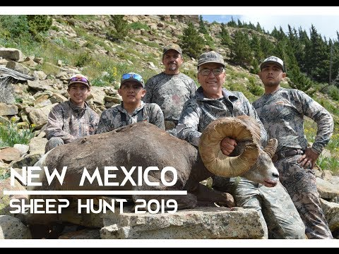 "pecos-wilderness-bighorn-sheep-hunt-2019-|-184""-ram"
