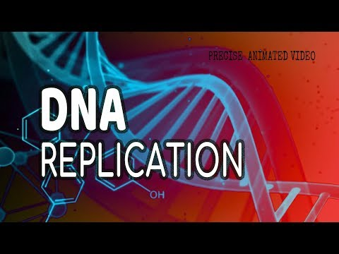 DNA Replication | Helicase | leading strand | Lagging strand