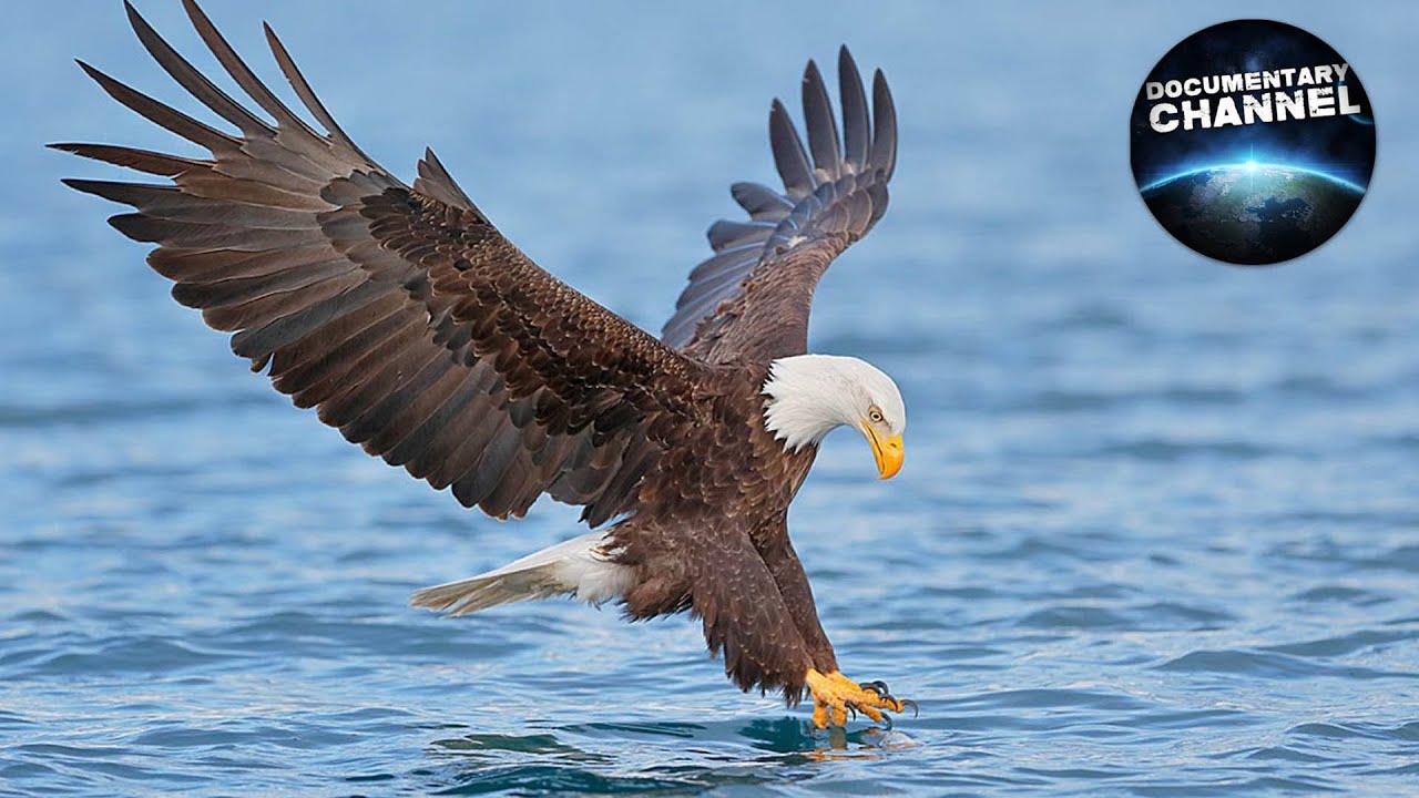 Ptaki Szponiaste Seria Dzikie Wyprawy Pl Youtube