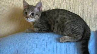 Полосатая милашка - котенок в добрые руки!