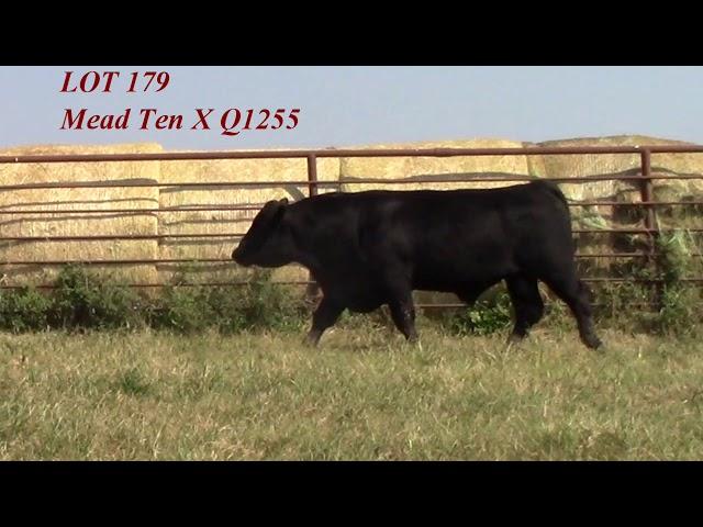 Mead Angus Lot 179