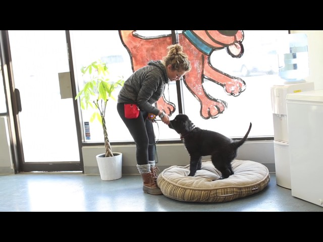 TYD60 Moment- How to Train a Dog With an Electric Collar and Food