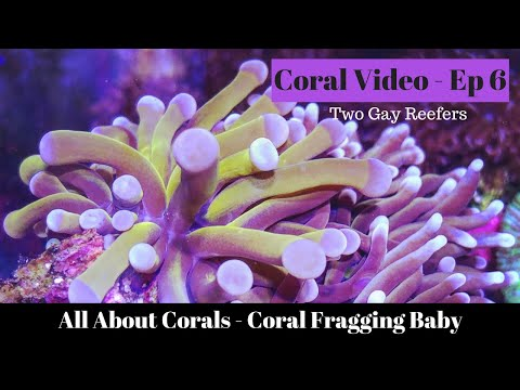All About Coral - Coral Fragging Baby