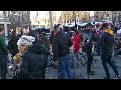 Pigeons are attacking, Dam Square Amsterdam 2017