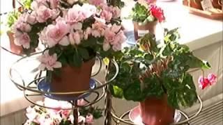 Уход за цветами весной(, 2015-04-27T17:10:27.000Z)
