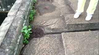 Isbot tosh qadimgi sivilizatsiyalar, Sigiriya ichida granit hovuz machined.