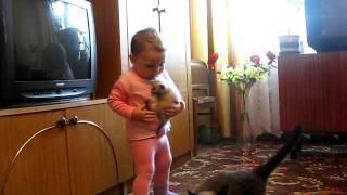 Кошка забрала котенка