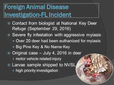 Dr. Michael Short - Update: New World Screwworm in Florida