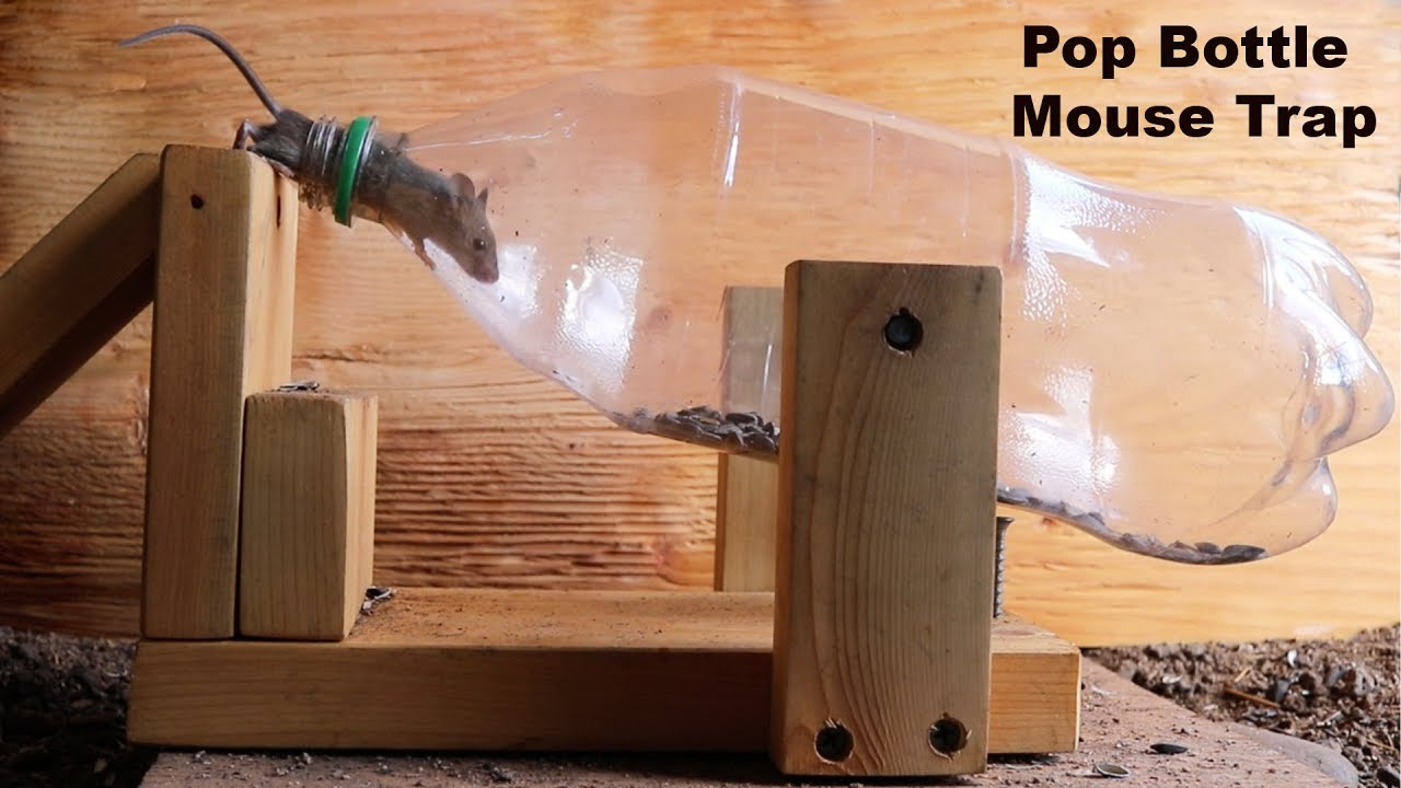 this-pop-bottle-mousetrap-cost-me-36-on-ebay-but-does-it-work-mousetrap-monday