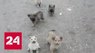 Пес в мешке: как под видом породистых собак продают дворняжек