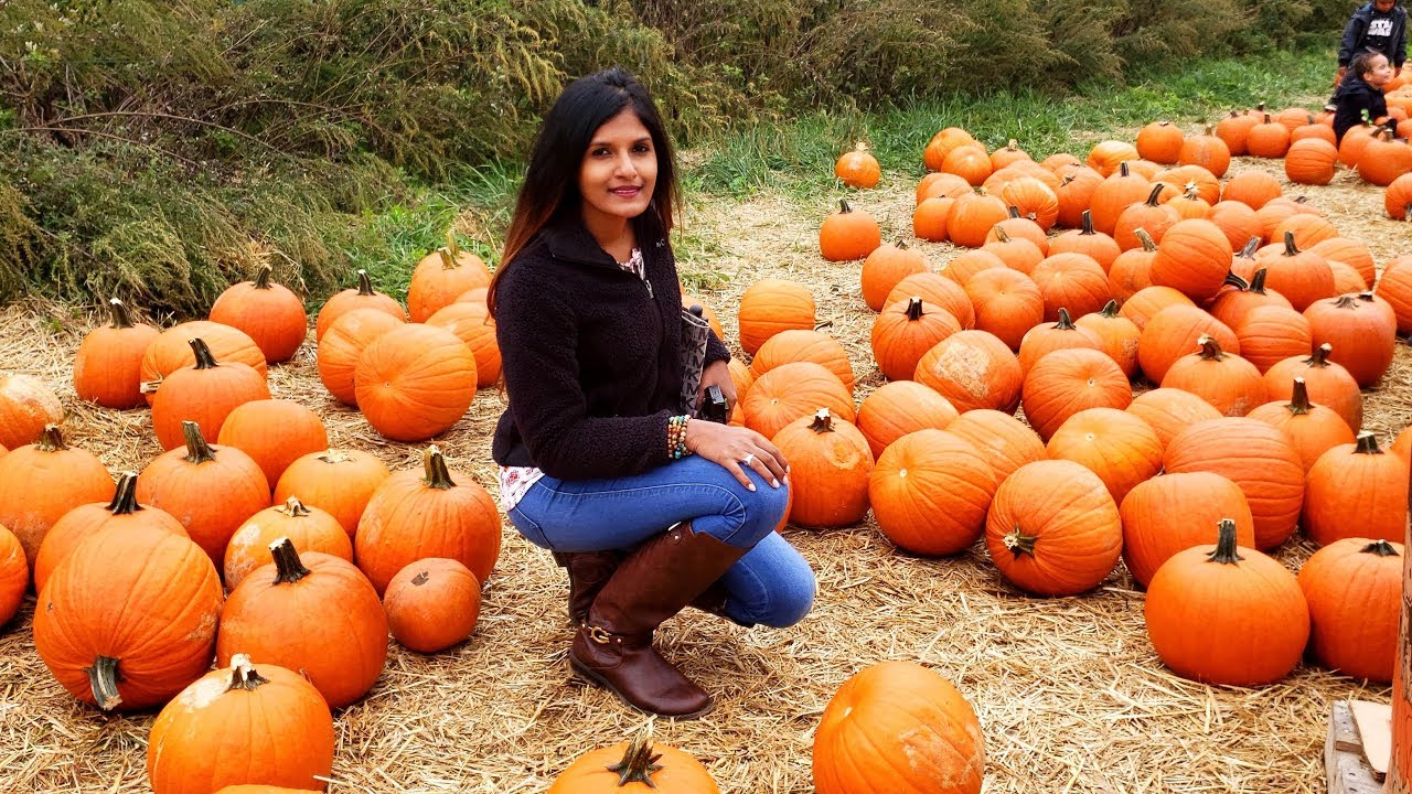 Pumpkin Picking At The Queens County Farm Museum Youtube