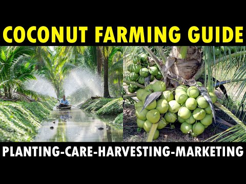 COCONUT FARMING / COCONUT CULTIVATION | Planting, Growing, Varieties, Care & Harvesting