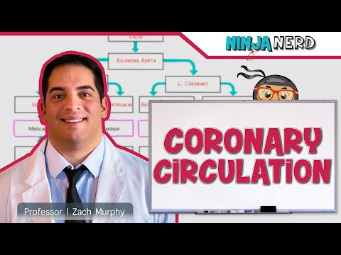 Circulatory System | Coronary Circulation | Flow Chart
