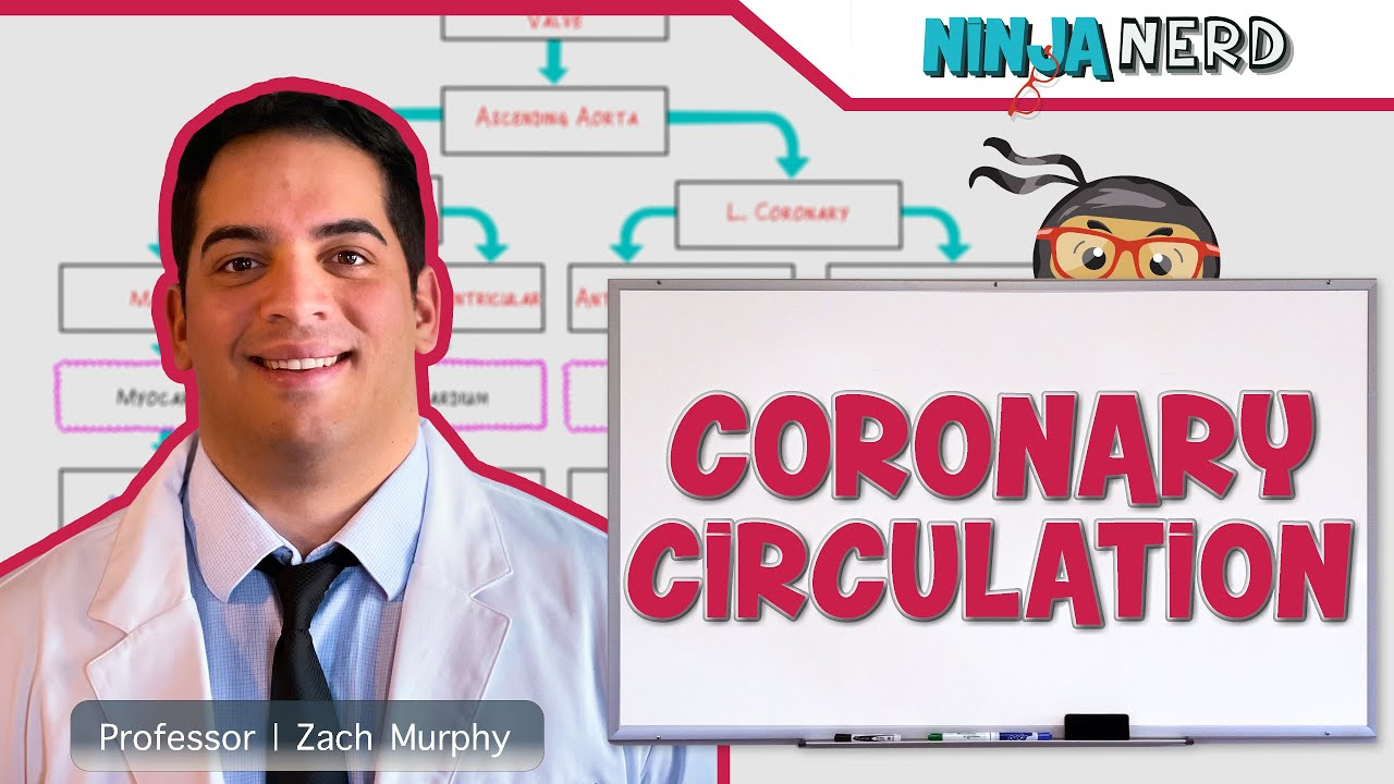 Circulatory System Coronary Circulation Youtube