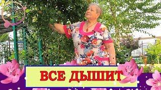 ВСЕ ЧТО НУЖНО И ТАМ ГДЕ НАДО : Соколова Светлана