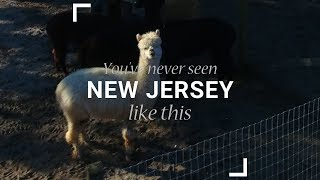 Jersey Shore Alpacas: You've Never Seen New Jersey Like This