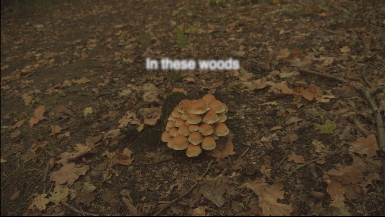 In these woods | A trip through the forests of Berlin