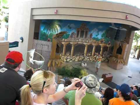 Parrot Jungle bird show