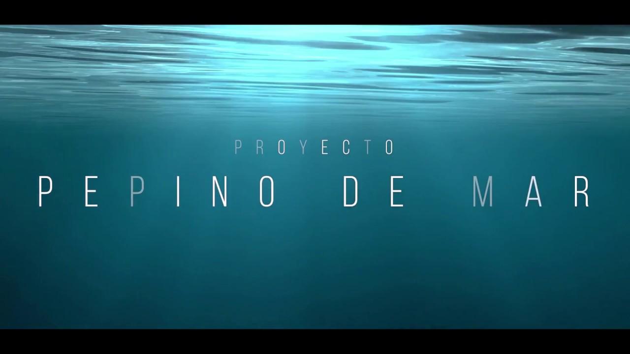 trailer documental proyecto pepino de mar - YouTube