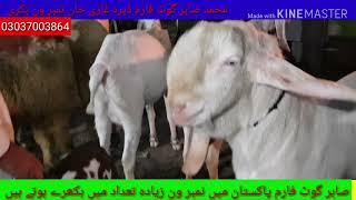 sajawal goat farm video, sajawal goat farm clips, dodoclip com