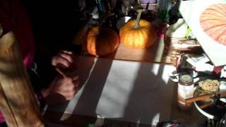 Drawing Squash Pumpkin Hybred 2010
