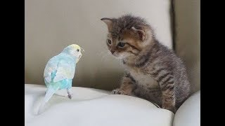 funny and cute parrots talking like humans