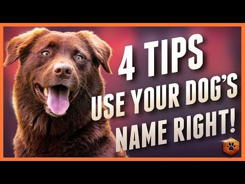 Dog Ignoring You? 4 Dog Name Strategies to Help!