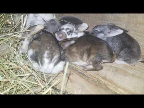 Что стало с крольчатами //Кролики// кроличья жизнь